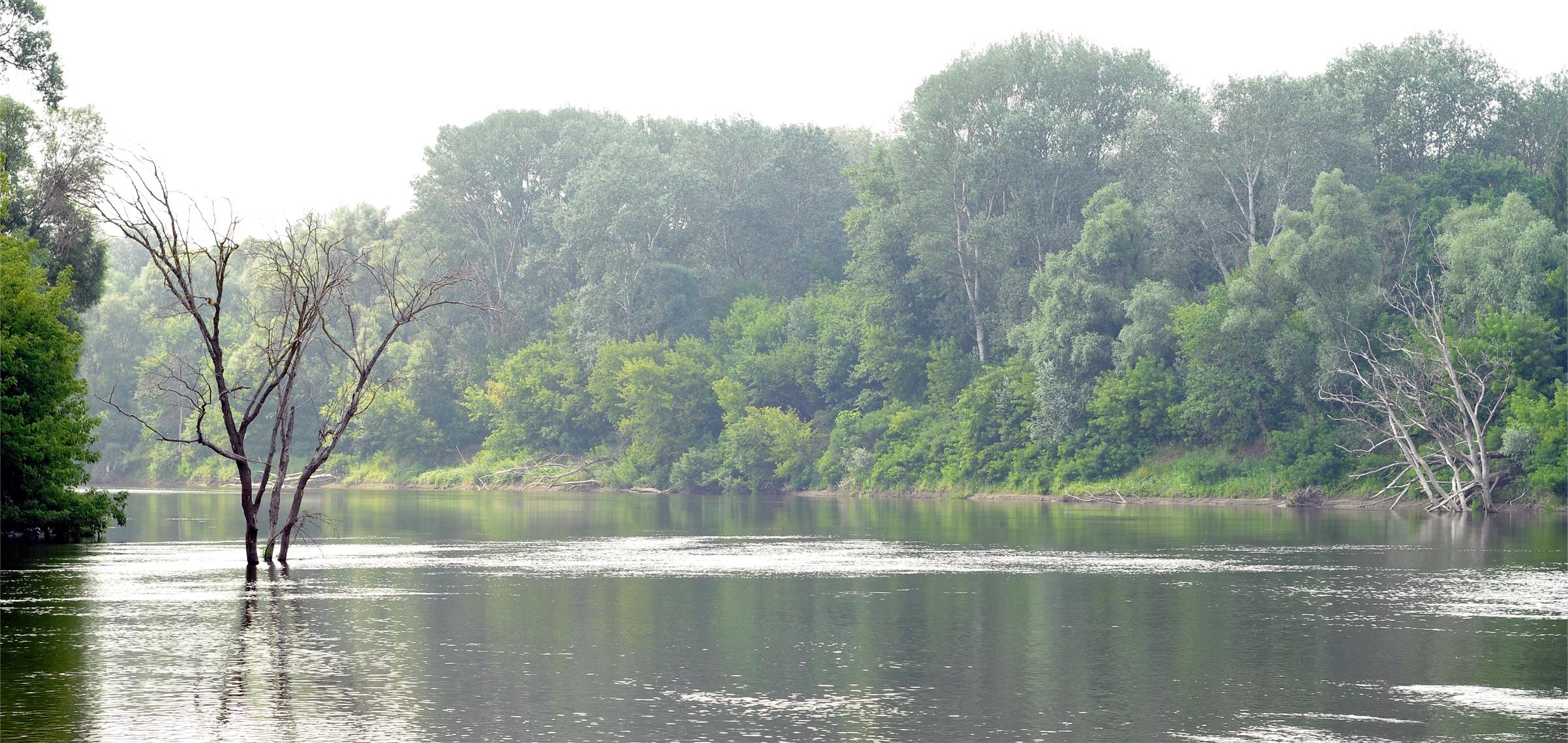 Сухое дерево летом в воде